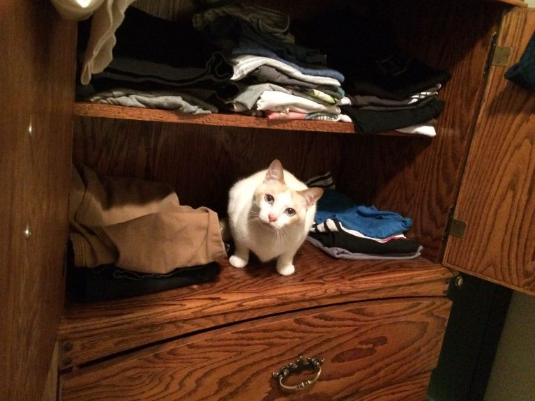 """This looks like a perfect spot for me.  I can even help put cat hair on your clothes for you.  I know you like that."""