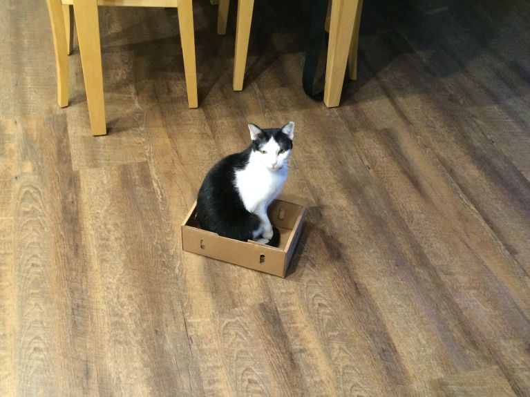 Cat trapping 101