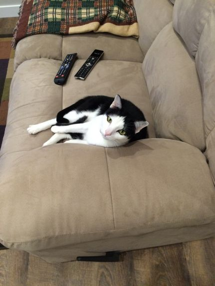"""""""I found my spot.  Where are you going to sit?"""""""